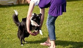 2 lezioni dog dance