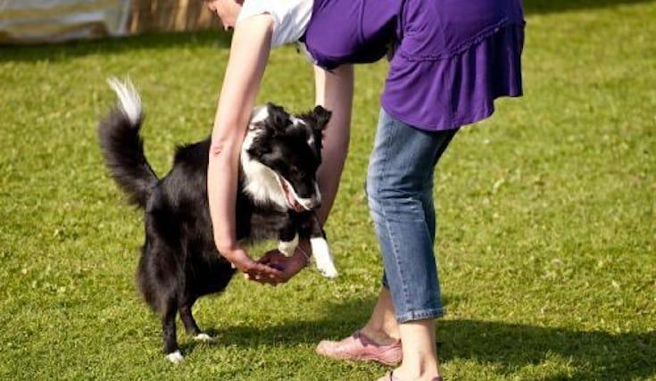 2-lezioni-dog-dance_138439