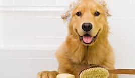Toelettatura cane medio