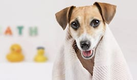 Lavaggio cane piccolo