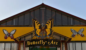 Butterfly arc domenica