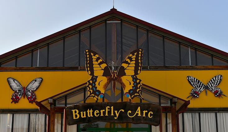 Butterfly-arc-domenica_150929