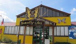 Butterflyarc sabato 2a+2b