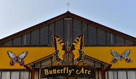 Butterflyarc sabato 2a+3b