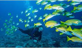 Corso open water diver 18
