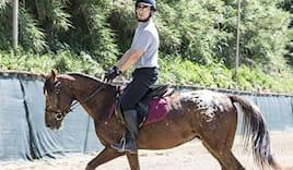 1 lezione di cavallo €15