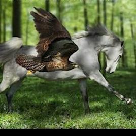 La Fenice - Horse